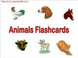 动物类卡片