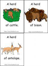 动物量词卡片