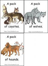数量动物卡片2