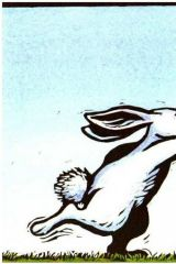 我的兔子朋友4