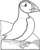 海雀-鸽子-野鸡简笔画1