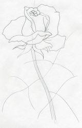 学画玫瑰6
