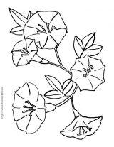 花类简笔画6