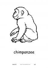 非洲动物简笔画4