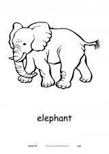 非洲动物简笔画6