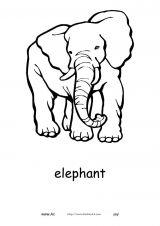 非洲动物简笔画5