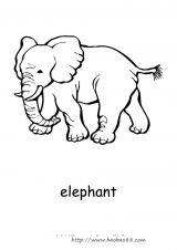 澳大利亚动物填色图4