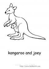 澳大利亚动物填色图6