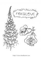 花朵填色图4