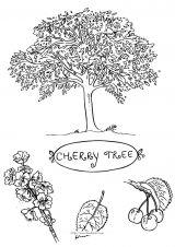 树和果实简笔画4