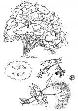 树和果实简笔画5