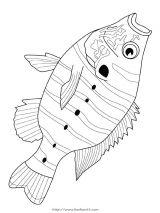 41种鱼儿简笔画