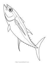 41种鱼儿简笔画3