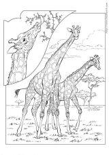 鹿的简笔画