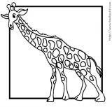 鹿的简笔画4