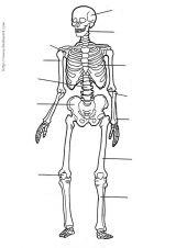 人体简笔画3