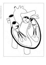 人体简笔画5