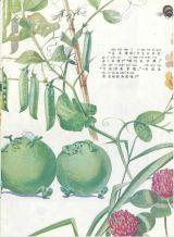 五颗豌豆5