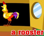 R开头单词:Rooster 公鸡