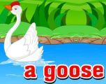 G开头单词:Goose