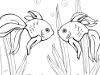 两只金鱼填色