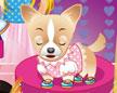 芭比装扮宠物狗