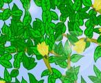 全球仅此一种的树(杜仲)_植物知识