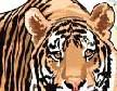 猫是老虎的先生-虎的种类