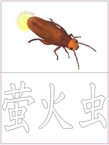 汉字涂色:萤火虫